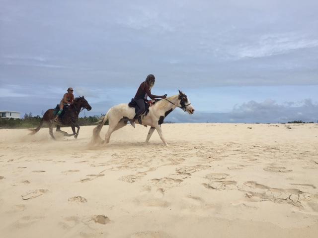 Anguilla horses beach Banksie Banx