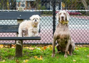Dogs Chicago Lincoln Square