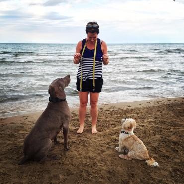 Montrose Dog Beach Chicago MonDog Lake Michigan
