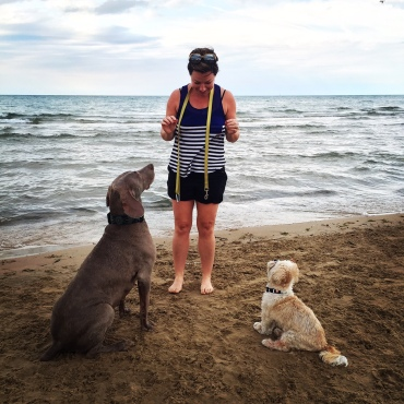 Montrose Dog Beach Chicago MonDog Lake Michigan